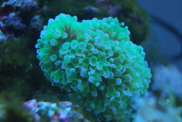 Un peu de corail