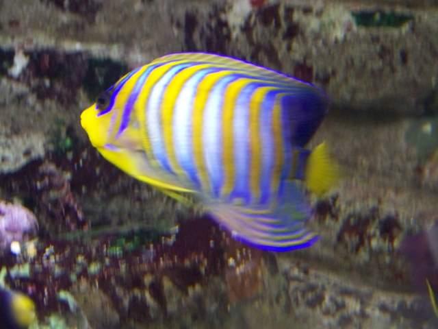 aquarium 600 litre