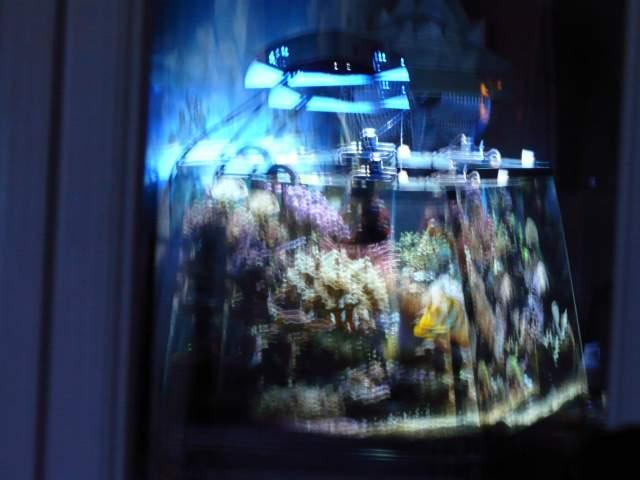 mon reflet dans la vitre