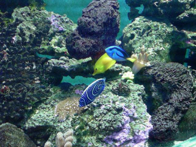 3 poissons