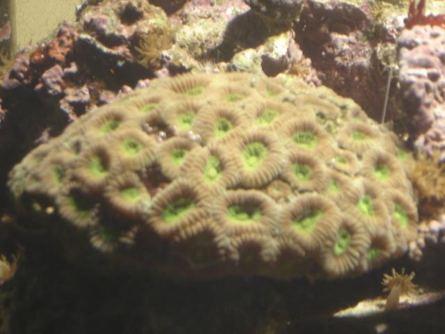 Mon 1er corail dur