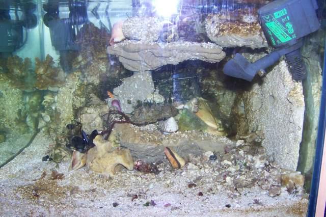 mise en eau 06/2009