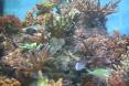 zoom sur les coraux