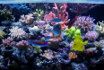 reef tank steph_69