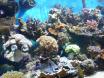 qqs coraux