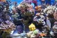 coraux divers