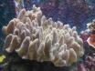 photos coraux