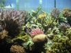 coraux.