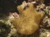 Mon &er corail mou