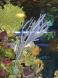 gorgonia et guaiagorgia
