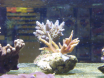 je sauve des coraux