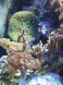coraux pipoulou