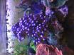 nouveau coraux