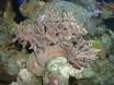 mes coraux
