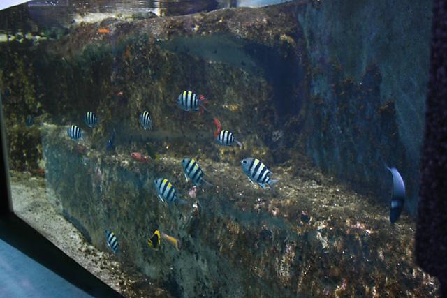 Le nouveau bassin Caraibe de l'aquarium du grand lyon