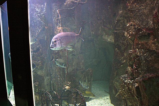 Le bac méditerranéen de l'aquarium du grand lyon