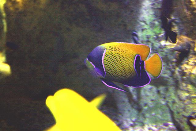 Navarchus : aquarium du grand lyon