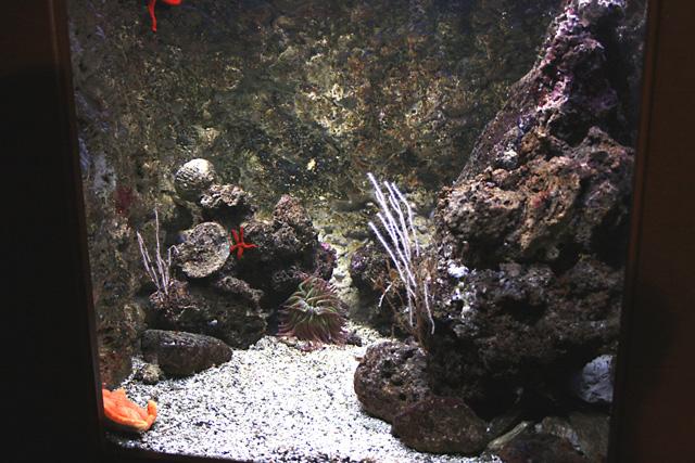bac méditerranéen avec son anémone : aquarium du grand lyon