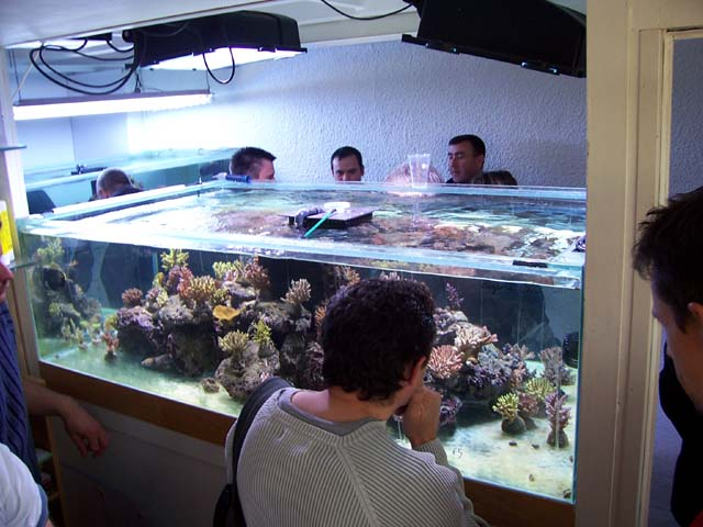 Arrivage AF Aquarium mars 2008