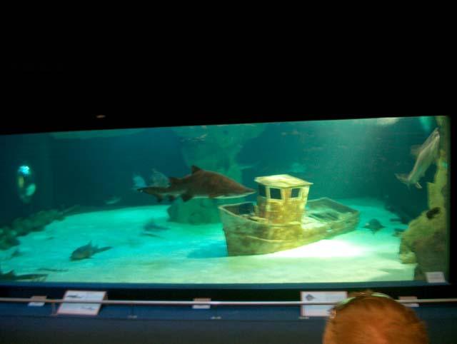 Reportage sur l 39 aquarium du croisic for Petit aquarium