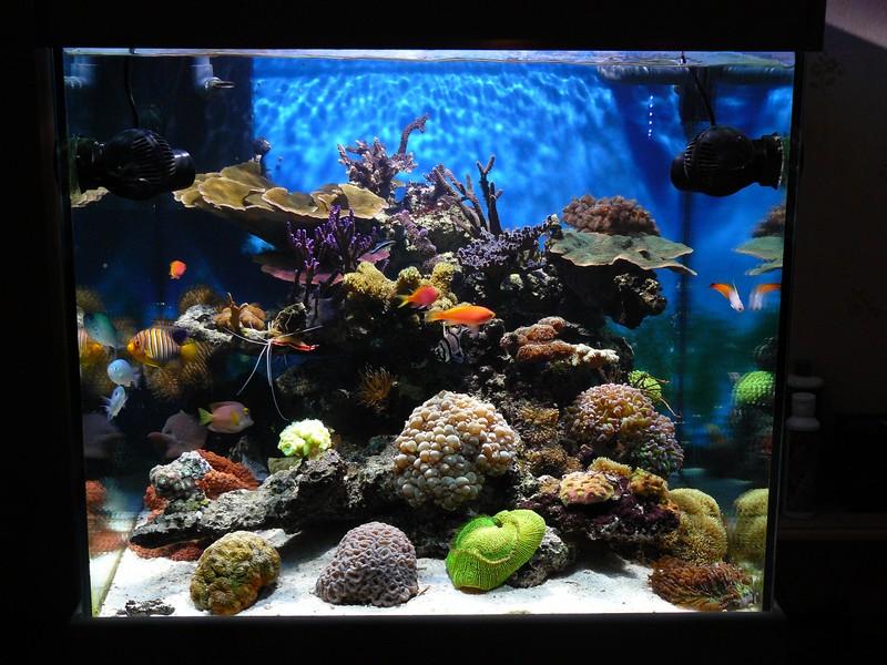Le bac de gomegome for Aquarium 120 litres