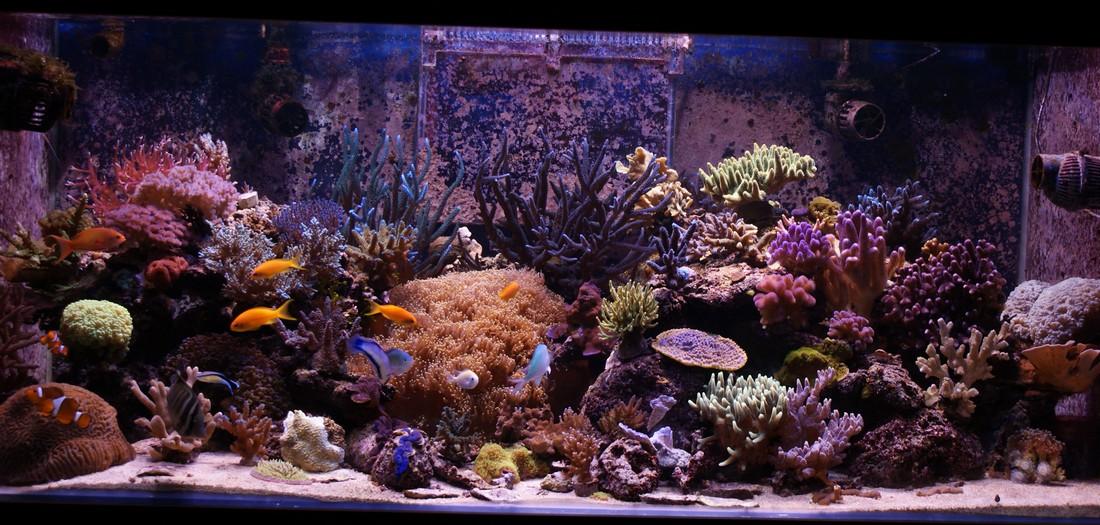 Nitrate aquarium eau de mer 28 images nitrate en for Achat aquarium eau de mer